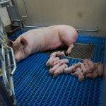 Aeres Farms 2020 - DSC09076 (1)