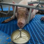 Aeres Farms 2020 - DSC09304 (1)
