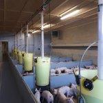 Nieuwbouw biggenstal varkens