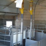 bioboer kraamhok biovarken