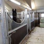 paardenbox paard hekwerk maatwerk